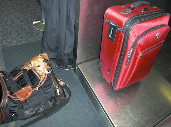 Bob checking his luggage at the Northwest counter